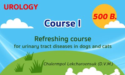 (COURSE I) Refreshing course for urinary tract diseases in dogs and cats