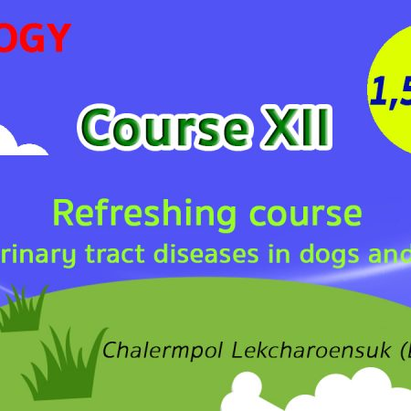 (COURSE XII) Refreshing course for urinary tract diseases in dogs and cats