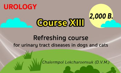 (COURSE XIII) Refreshing course for urinary tract diseases in dogs and cats
