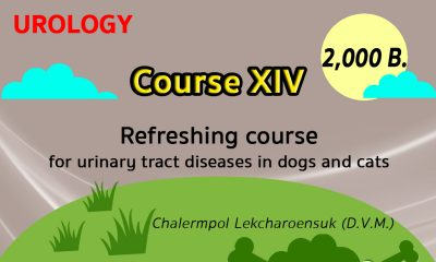 (COURSE XIV) Refreshing course for urinary tract diseases in dogs and cats