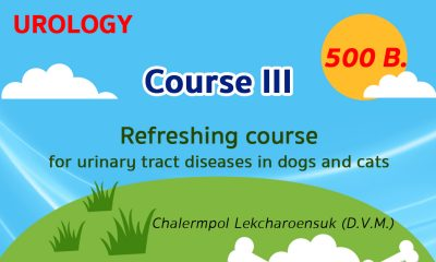 (COURSE III) Refreshing course for urinary tract diseases in dogs and cats