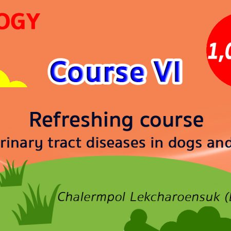 (COURSE VI) Refreshing course for urinary tract diseases in dogs and cats