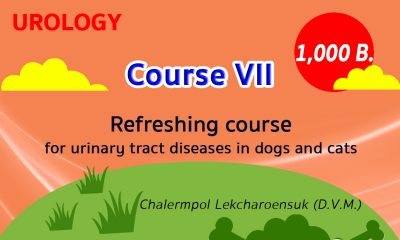 (COURSE VII) Refreshing course for urinary tract diseases in dogs and cats
