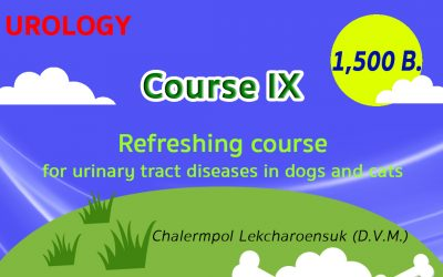 (COURSE IX) Refreshing course for urinary tract diseases in dogs and cats