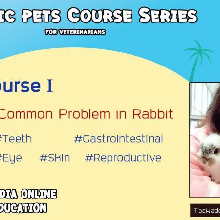 5 Common problems in rabbit