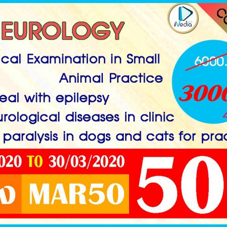 All Neurology 4 Courses