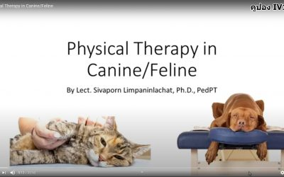physical Therapy in Canine/Feline