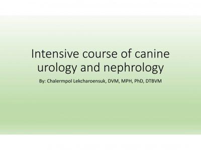 ป้องกัน: Intensive course of canine urology and nephrology