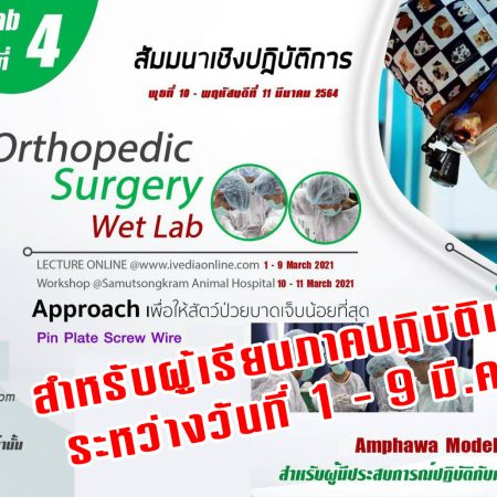 ป้องกัน: Orthopedic Surgery (Wet Lab) IV