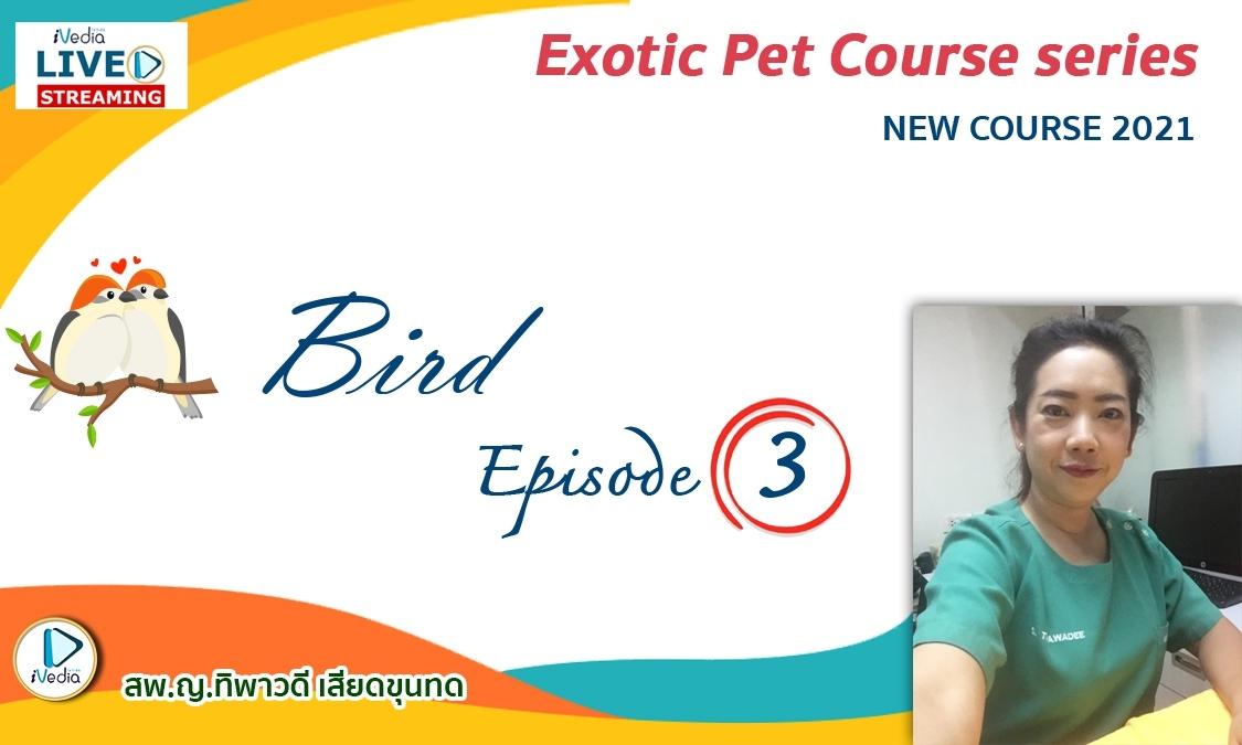 Bird Episode 3